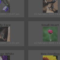 Create a Neat Flickr Gallery with SimplePie